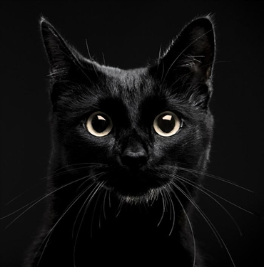ohternyataaa.files.wordpress.com/2017/01/black_cat_photo.jpg